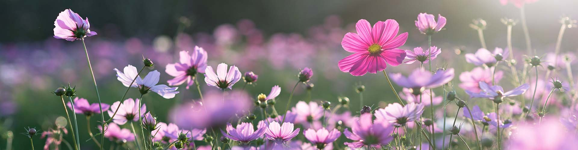 What kinds of flowers can you expect to see this Spring?