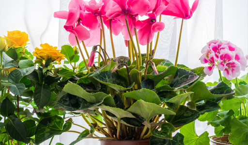 POTTED PLANTS GIFT BASKETS
