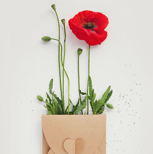 Our Remembrance Day Gift Ideas for Bosses & Co-Workers
